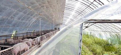 红外二氧化碳传感器在温室养殖厂中的应用